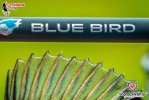 favorite_nowy_new_blue_bird_photo_2302