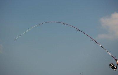 crazy-fish-rod-ebisu-violet-II-10
